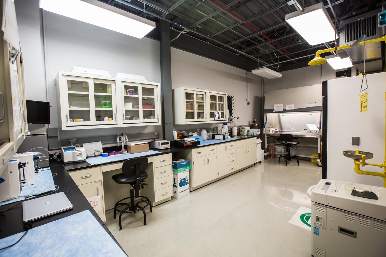 bio lab 10