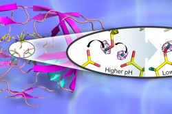 A 3D structure of the HIV-1 protease in cartoon representation with bound clinical drug darunavir (shown as sticks). The catalytic site contains two closely positioned aspartic acid residues. The insert depicts the hydrogen transfer reaction in the catalytic site, captured for the first time by neutron crystallography. (Credit: Jill Hemman and Andrey Kovalevsky, Oak Ridge National Laboratory)