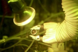 By producing 50 grams of plutonium-238, Oak Ridge National Laboratory researchers have demonstrated the nation's ability to provide a valuable energy source for deep space missions.