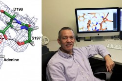 Enhanced knowledge of the bacterial enzyme HpMTAN's critical functions may enable scientists like Univ. of Toledo's Don Ronning to influence the development of target-specific drugs for patients with gastrointestinal issues, including stomach cancer.