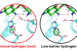 Active site of an antibiotic inactivating enzyme determined with neutron crystallography.  In the catalytic triad, the position of the hydrogen atom (circled) controls enzyme specificity and activity.  When a low-barrier hydrogen bond is present (right), the enzyme turns over ligands 30-fold faster and binds antibiotics 80-fold stronger, compared to a canonical hydrogen bond (left).