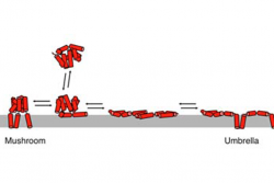 Schematic representation of a BAX protein.
