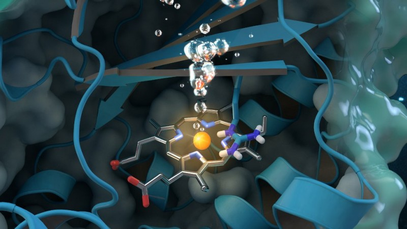 Chlorite dismutase is a unique oxygen-generating enzyme that degrades chlorite, an industrial pollutant found globally in groundwater, drinking water and soils. Research conducted at ORNL contributes to a comprehensive structural and biochemical analysis of the enzyme, paving the way for future environmental applications. Journal cover art reprinted with permission from ACS Catalysis, vol. 7, issue 11, November 3, 2017. Further permissions related to the material excerpted should be directed to the American