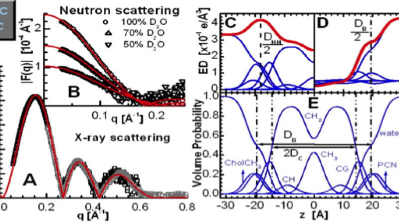 An illustration of lipid bilayer structure determination through the joint refinement of X-ray and neutron scattering data obtained for POPC bilayers at 30oC.