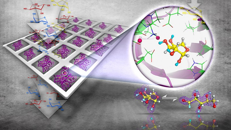 Unlocking Enzyme Synthesis of Rare Sugars to Create Drugs with Fewer Side Effects