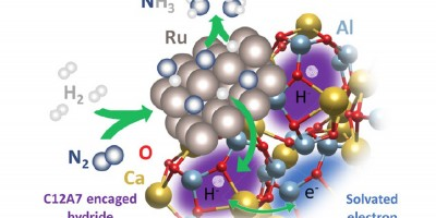 Surface Hydrogen Dominates Ammonia Synthesis Catalyzed by Electride