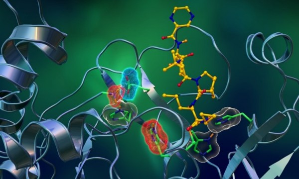 Inhibitor Binding and Active Site Electrostatics in SARS-CoV-2 Main Protease