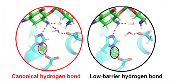 Low-Barrier Hydrogen Bonds Improve Enzyme Interaction