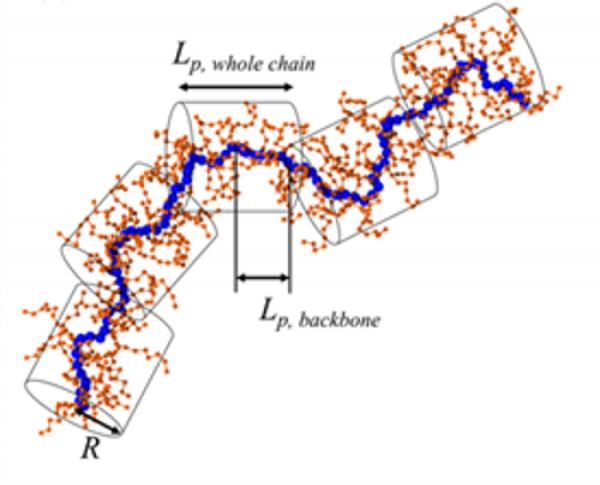 Structural Heterogeneity in Semiconducting Polymers