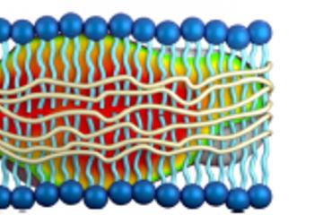 Copolymer/Lipid Nano-Assembly as Membrane Mimetic