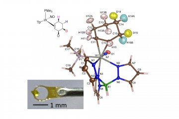 Site Specific Deuteration of a Cyclohexene Complex