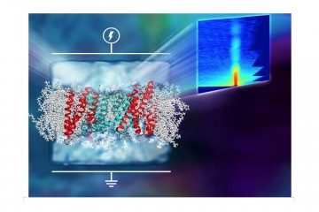 Voltage Dependent Structure  of Ion Transport Channels in Membranes